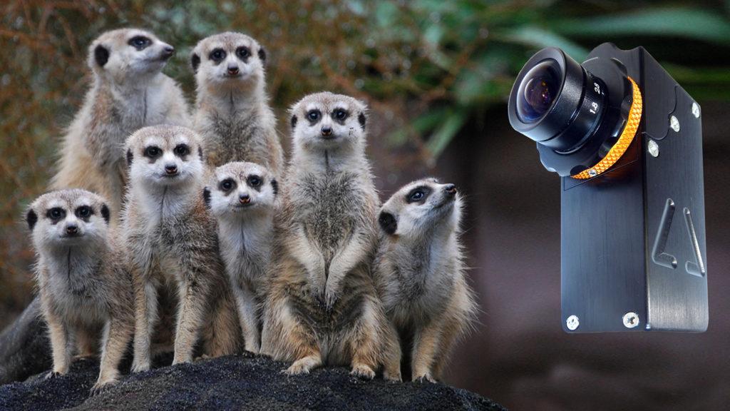 Camera_Corps_MeerCat_miniature_HD_broadcast_camera.jpeg