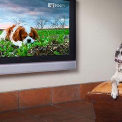 DOGTV 4.jpg